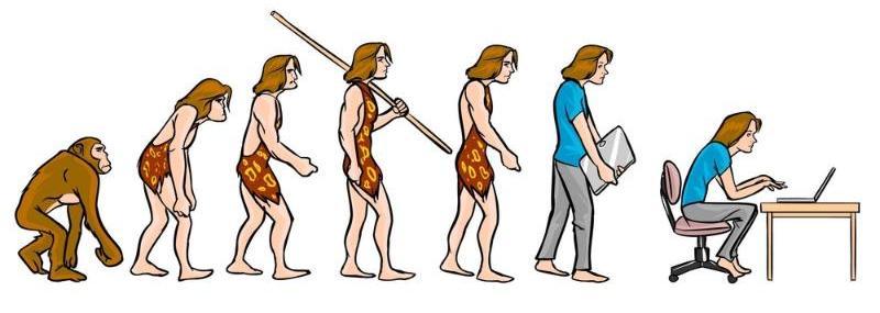 evolution of posture